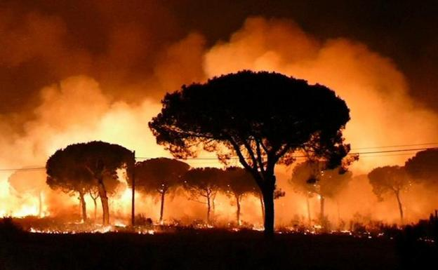 Fire Doñana