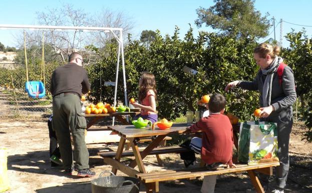 Huertos Del Turia Recogida De Naranjas En Familia En Valencia