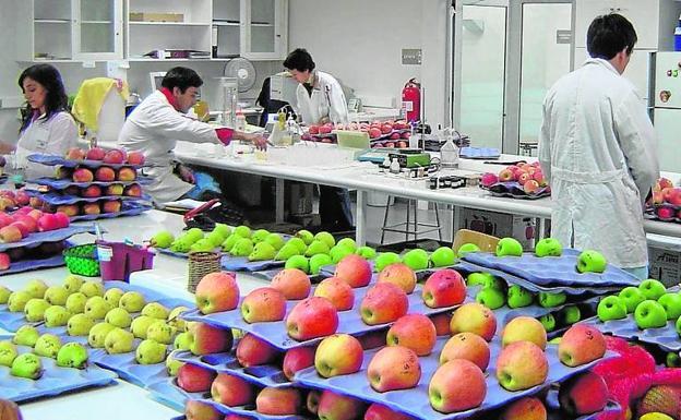 Frutas-u70822523619dxh-u901207527189a9h-624x385@las%20provincias-lasprovincias