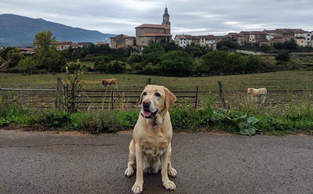 Tu perro durante el estado de alarma: permisos, abusos y restricciones